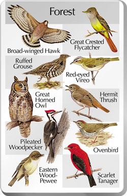 Лесные птицы подмосковья фото.  Фото птиц донецка.